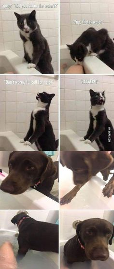 20 Hilarious and Funny Animal Memes Make Me Laugh Funny Animal Pictures Of The Day - 22 Pics 29 Hilarious Dog Memes and Pictures See the funniest dog memes and pictures here as doggos and puppers do what they. Funny Animal Memes, Cute Funny Animals, Funny Animal Pictures, Cute Baby Animals, Funny Cute, Funny Dogs, Funny Memes, Funniest Animals, Funniest Pictures