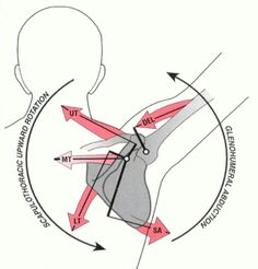 scapular arthokinetics
