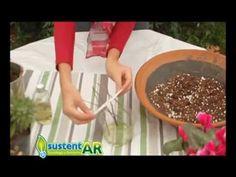 Cómo hacer un enraizante natural de ramas de sauce - YouTube