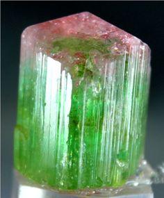 WOW 95 Carat Top Quality Terminated & Gemmy Bi Color TOURMALINE Crystal @Paprok