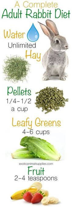 Pet Rabbit Diet: Bunny Food & Nutrition Exotic Animal Supplies : A complete adult rabbit diet. These are all the healthy foods to feed your bunny. Unlimited hay and fresh water. 1 4 1 2 cups of pellets per day. 4 6 cups of leafy greens. 2 4 teaspoons o Pet Bunny Rabbits, Meat Rabbits, Raising Rabbits, Food For Rabbits, Caring For Rabbits, Vegetables For Rabbits, What To Feed Rabbits, Bunny Toys, Fresh Vegetables