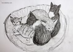 Sleeping #Kitten Pillow #Nap  Four #cute #kittens are snuggled together in a cat bed and are using each other as #pillows for their shared #cat nap.