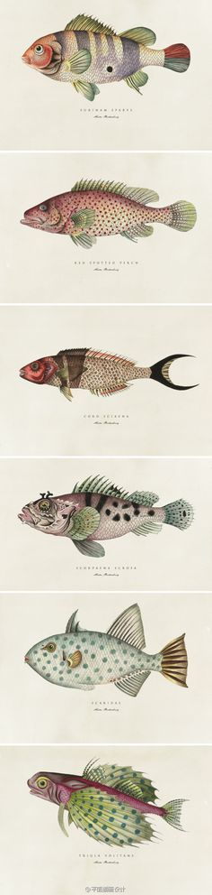 Botanical fish prints by Soil Design, Cape Town, South Africa. Contemporary