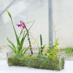 Angles Terrarium, Rectangle in Gardening PLANTERS Terrariums Vessels at Terrain