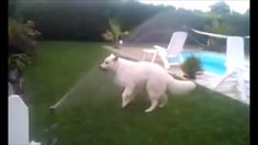 Funny dog playing with water Funny Dogs, Horses, Play, Water, Youtube, Animals, Gripe Water, Animales, Animaux
