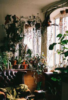 Home - Maison - Plants - Plantes - Light - Lumière - Living room - Salon - Garden - Homegarden