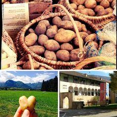 Festa della patata a #CampoLomaso - da venerdì 23/10 ritorna l'attessissimo weekend dedicato a uno dei prodotti tipici del #Trentino: la #patata