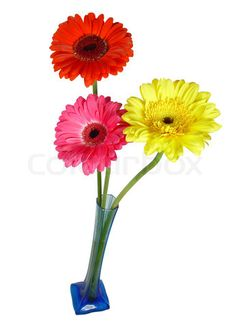 Fake flowers never die.