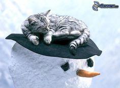 gatto addormentato, pupazzo di neve, cappello (cambiare)