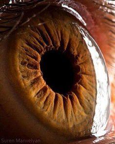 Córnea completamente transparente - só vemos a sua presença sobre a íris pelo reflexo da luz à direita.