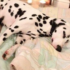 My Pup! Alvin Paul