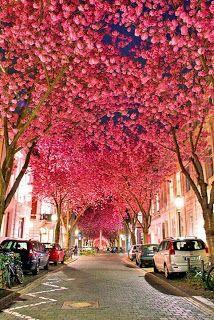NY en Mayo: Cherry Blossom Festival: Esta tradición anual, conocida en japonés como Sakuna Matsuri y celebrada el primer fin de semana de mayo, festeja la gran floración rosa de los cerezos Kwanzan en el famoso paseo del jardín botánico de Brooklyn.  Hay atracciones, refrigerios y una belleza imponente.
