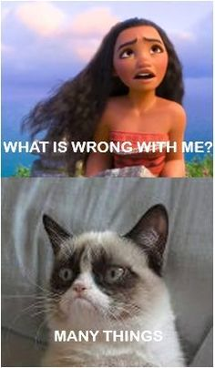 "Here's a great collection of some Grumpy Cat Memes in People style. Just read out these "" Grumpy Cat Memes People"" and get some fun and laughing point for laugh. Grumpy Cat Quotes, Funny Grumpy Cat Memes, Cat Jokes, Funny Animal Jokes, 9gag Funny, Funny Laugh, Funny Animals, Cats Humor, Cute Cat Memes"