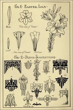 """Lily Patterns in """"Monumental Drawing and Lettering: The Lily in Applied Ornament"""" (1926)"""