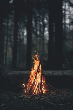 portrait Display, Nature, Trees, Forest, Fire, Wood, Leaves, Dark, Evening, Branch, Bonfires Wallpaper | How Do It Info