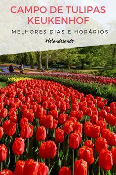 Wonderful Places, Beautiful Places, Beautiful Pictures, Tulip Bouquet, Tulip Fields, Most Beautiful Gardens, Tulips, Netherlands, Holland