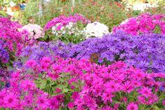Flores rosadas, lilas y blancas