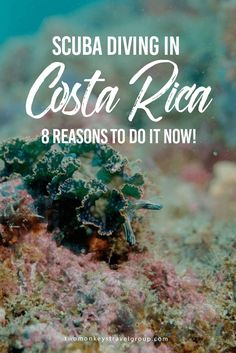 SCUBA Diving in Costa Rica - 8 Reasons to do it now! Diving is one of the greatest experiences you could ever undertake, no matter how many times you dive or in how many exotic locations, the world underwater never ceases to amaze you with its alien landscapes and bizarre-looking creatures with comic book superhero abilities of  attack, defense and camouflage.