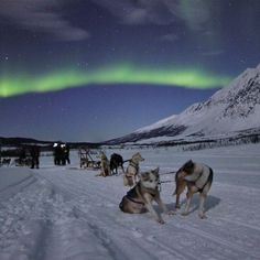 Hunting the Northern Lights from a Dog sled in the Lyngen Alps – Tour in Lyngenalps