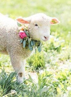 Cabras Animal, Mundo Animal, Cute Baby Animals, Animals And Pets, Spring Lambs, Sheep Art, Cute Sheep, Baby Sheep, Baby Lamb