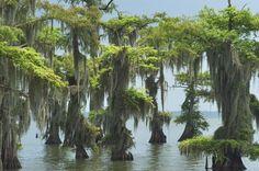 Bayou Photo Louisiana Swamp | ... mansion louisiana swamp louisiana mansions biloxi mississippi bernard