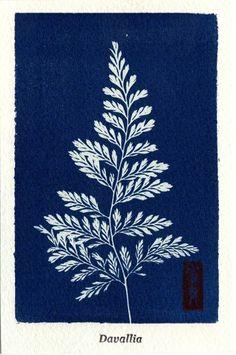 cyanotype 青写真 ボタニカル ポストカード モクビャクコウ 日本 :cyanpalace-Crossostephium:ライフスタイルデザイン - 通販 - Yahoo!ショッピング