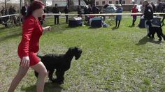 2016 Szerencs Dog Show Dog Show, Dogs, Animals, Animales, Animaux, Doggies, Animal, Pet Dogs, Animais