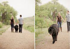 Engagement with Dogs