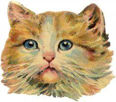 Vintage Orange and Cream Tabby - Royalty Free Image