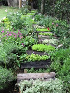 アプローチ / 植栽 Wooden Steps / Plants