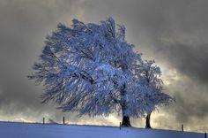 'Die Wetterbuche' von Ingo Laue bei artflakes.com als Poster oder Kunstdruck $18.44