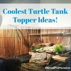 DIY Turtle Tank Toppers Are More Than A Nifty Idea. Your Turtle NEEDS One. Here's Why...