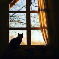 Ellos vigilantes curiosos reflexivos pensadores nostálgicos silenciosos originales creativos amables compasivos cercanos inteligentes dormilones traviesos divertidos golosos tenaces cariñosos elegantes inocentes verdaderos... ellos.. son mucho más que gatos... . . . #gatos #feelcats #ventana #otoño #ellos