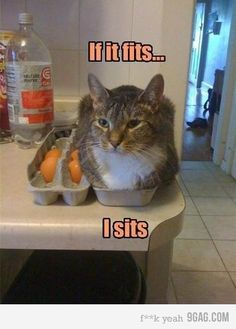 Cats and kittens are so funny and cute animals, they are simply the best! Just look how all these cats & kittens play, fail, get along with dogs, get their Funny Animal Memes, Funny Animal Pictures, Funny Animals, Cute Animals, Funny Memes, Funny Videos, Funny Photos, Funny Captions, Funny Cat Quotes
