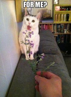 I thought that cat had really strange markings ...