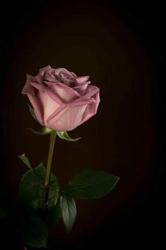 Single Pink Rose by Liz Barker Beautiful Flowers Wallpapers, Beautiful Rose Flowers, Amazing Flowers, Pretty Flowers, Cute Wallpapers, Floral Wallpaper Iphone, Iphone Background Wallpaper, Butterfly Wallpaper, Flower Wallpaper