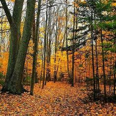 We wouldn't mind getting lost when the trees look like this! Instagrammer @jakebl123 snapped this beautiful fall shot from Gaylord in the Northern Lower Peninsula. Thanks for sharing! #PureMichigan #FallColors