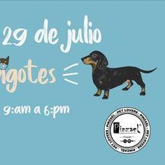 Acompáñanos este 29 de julio en la feria de colas y bigotes. Lugar y hora: Parques del río de 9:am a 6:pm No te lo pierdas!!! #medellin #parquesdelrio #amorporlosanimales #instadog #instacats #love #perros #gatos #catsofinstagram #dogsofinstagram