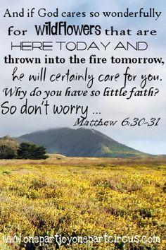 Ye of Little Faith   Study God's Word
