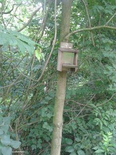 Eekhoorn voederkastje. Zie www.insectenhotel.com