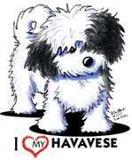Havanese Dog Tshirts Nightshirt KiniArt Pet | eBay