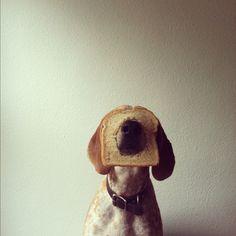 Un chien qui prend les poses