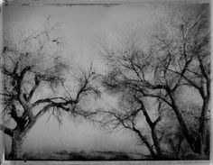 photo negative of trees Photo Negative, Greek Tragedy, Ethereal, Serenity, Woods, Remote, Trees, Gardens, Journey