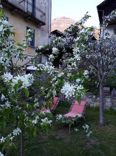 Chicano, B & B, Plants, Flora, Plant