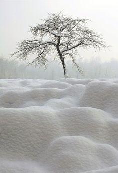 Pure White Winterscapes