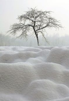 Pure White Winterscapes