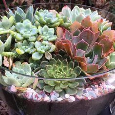 Gloriousness in a dish!!! @succulentcafeoceanside - your creativity inspires me! #succulent #succulents #succulove #succucolor #succulentlover #succulentgarden #beautiful #succubus #succulents_only #instagood #instabeauty #color #garden #gardens #gardening #cactus #cacti #cactuslover #plants #nofilter #nature #natural #instagardeners_feature #loveit #inspiring #photo #photooftheday #leaves #foliage #picoftheday