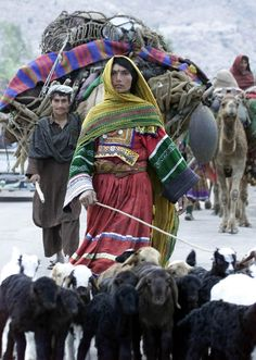 Afghan Nomads (Kuchi) travel from Pakistan to Afghanistan as winter approaches.