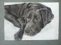 Lazy bones  #charcoal #drawing #art #labrador #dog