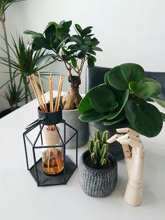 steeds meer groen in huis, planten cactus en hayhand